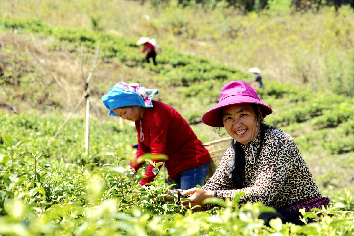 Farmer happily working on their tea farm